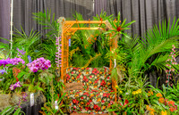 2013 Orchid Show, Rochester, NY